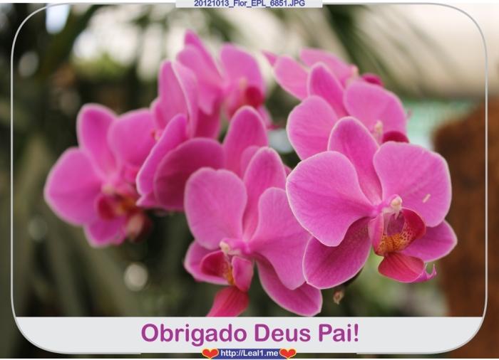 zmoA_20121013_Flor_EPL_6851