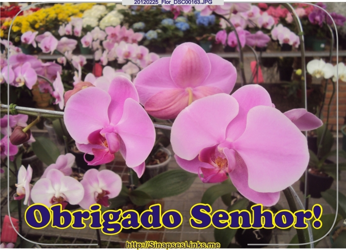 zMpe_20120225_Flor_DSC00163