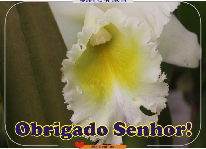 20120616_Flor_EPL_2635