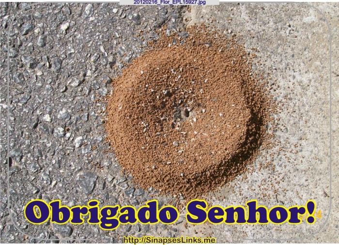 20120216_Flor_EPL15927