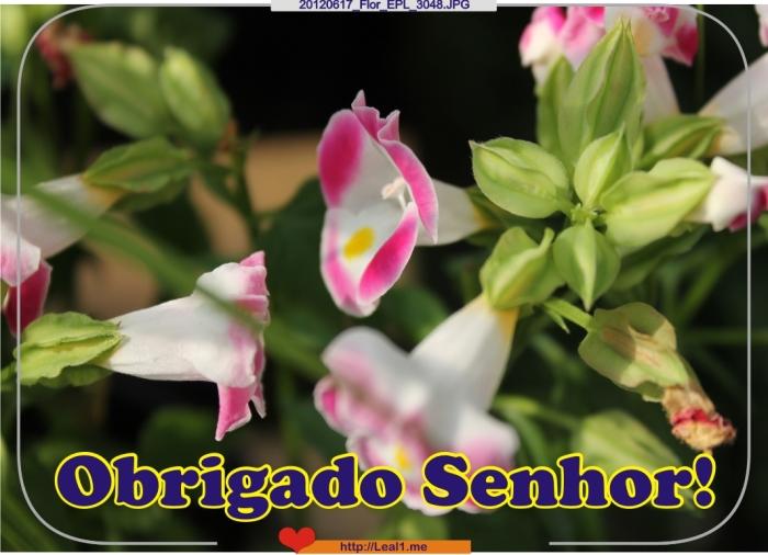 HmAC_20120617_Flor_EPL_3048