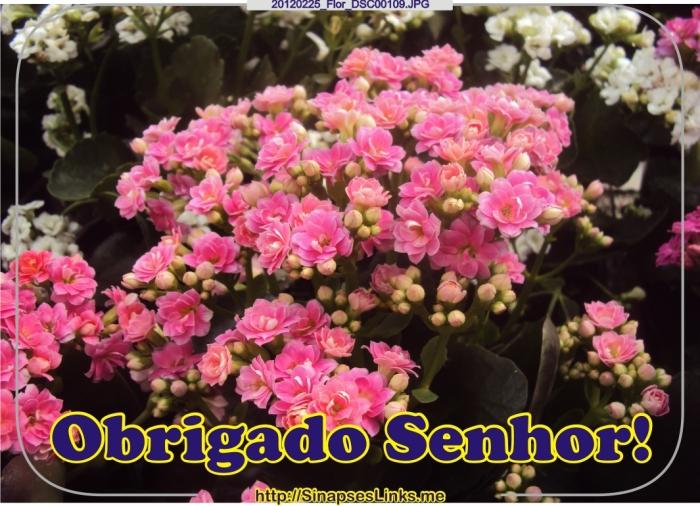 JtTO_20120225_Flor_DSC00109