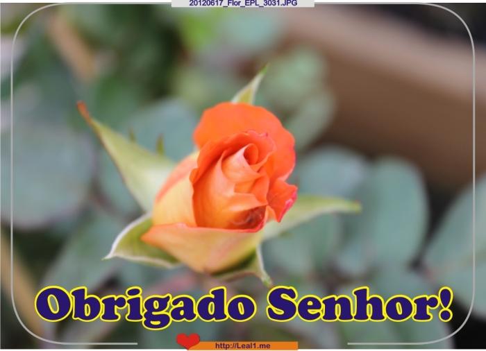 PgGX_20120617_Flor_EPL_3031