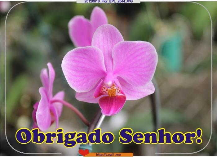 qGrS_20120616_Flor_EPL_2644