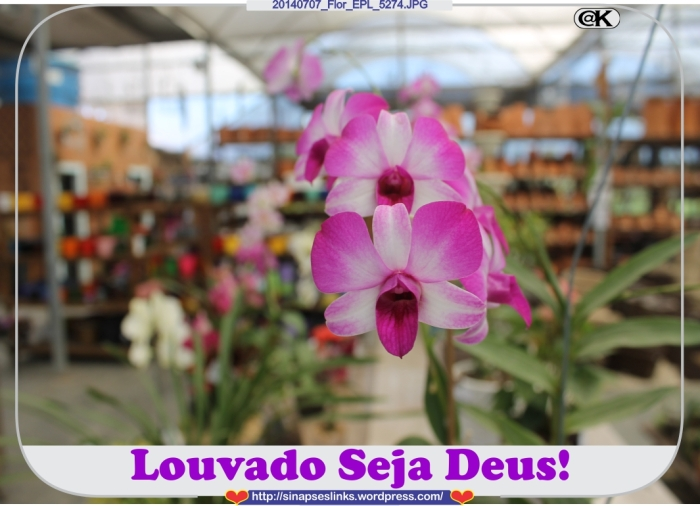 20140707_Flor_EPL_5274