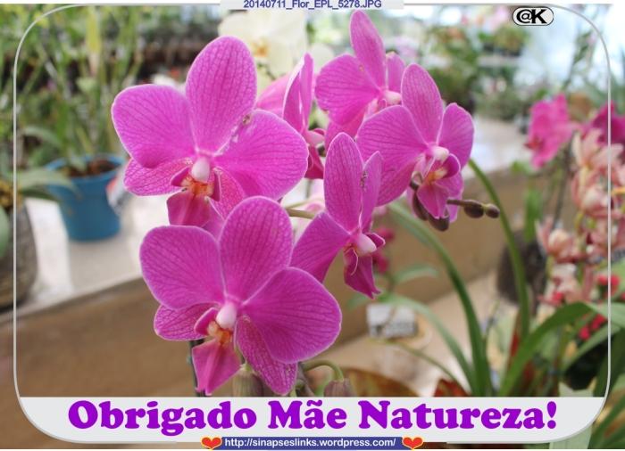 20140711_Flor_EPL_5278