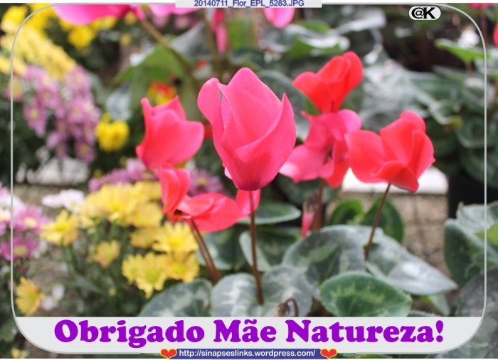 20140711_Flor_EPL_5283