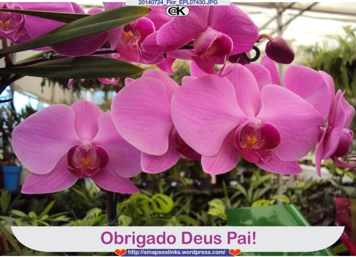 20140724_Flor_EPL07430