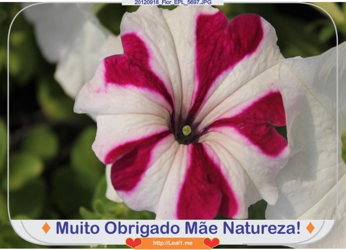 JWBK_20120918_Flor_EPL_5697