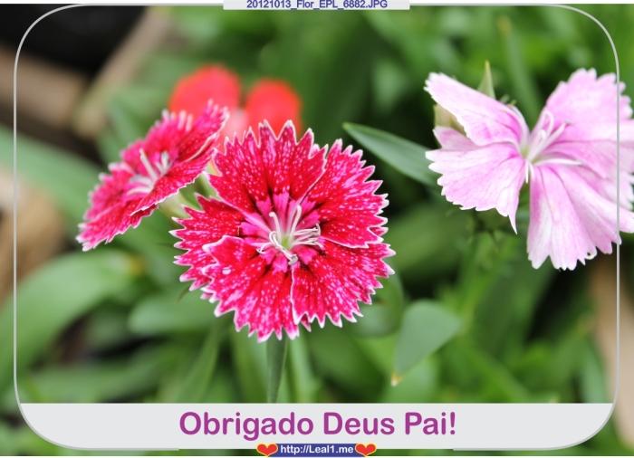 SNoT_20121013_Flor_EPL_6882