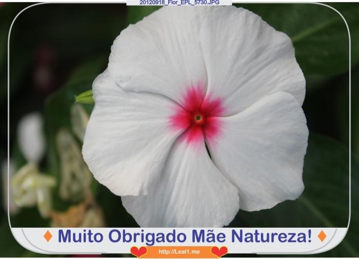 xRtm_20120918_Flor_EPL_5730