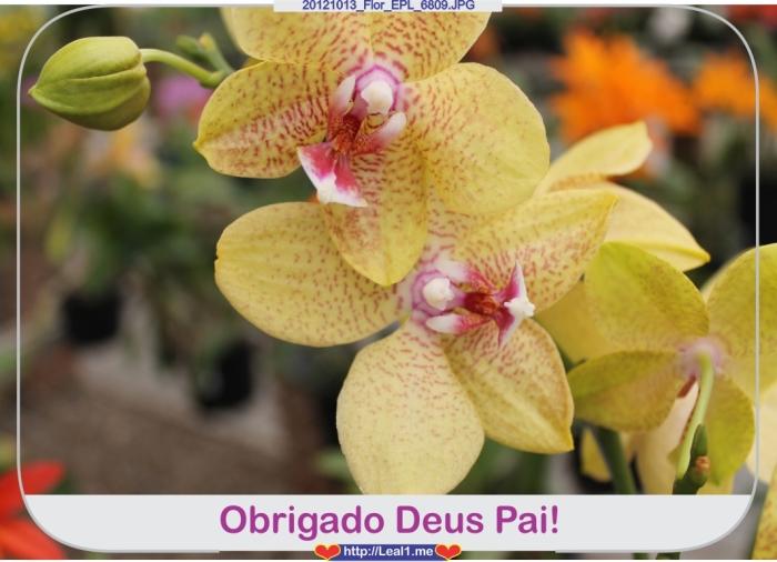 zvqf_20121013_Flor_EPL_6809