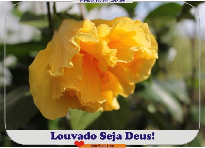 uPpa_20120726_Flor_EPL_4247