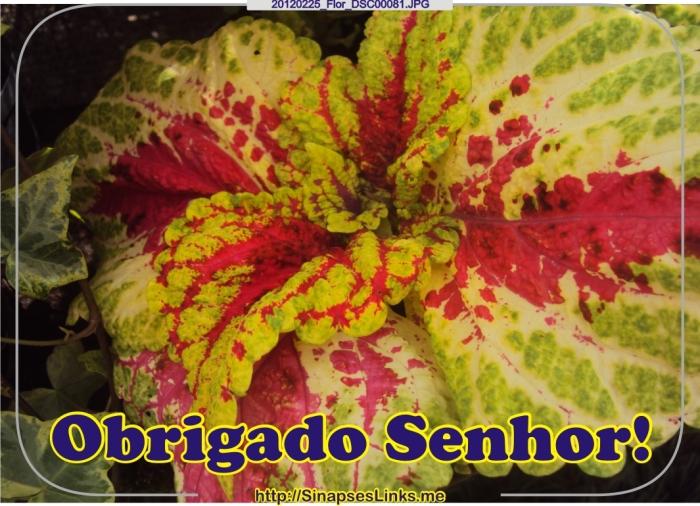 vCNt_20120225_Flor_DSC00081