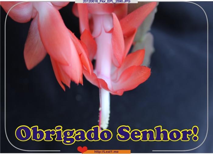 VCZQ_20120616_Flor_EPL_2590