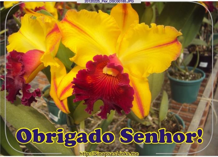 20120225_Flor_DSC00185