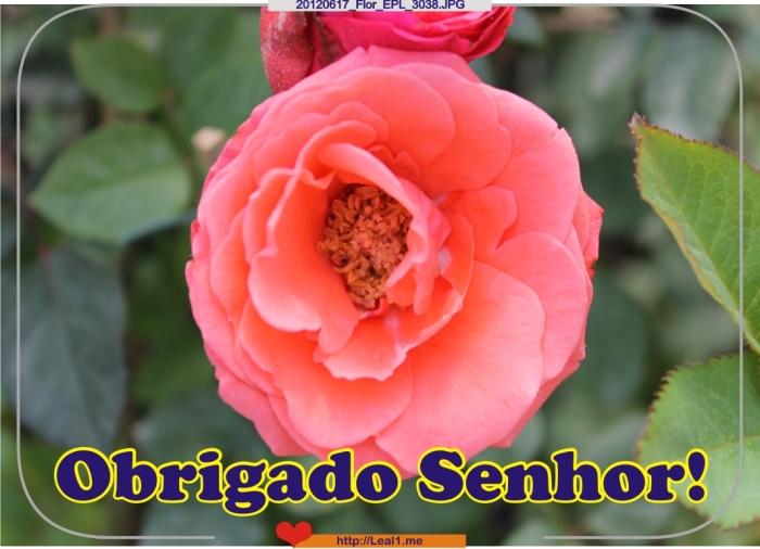 20120617_Flor_EPL_3038