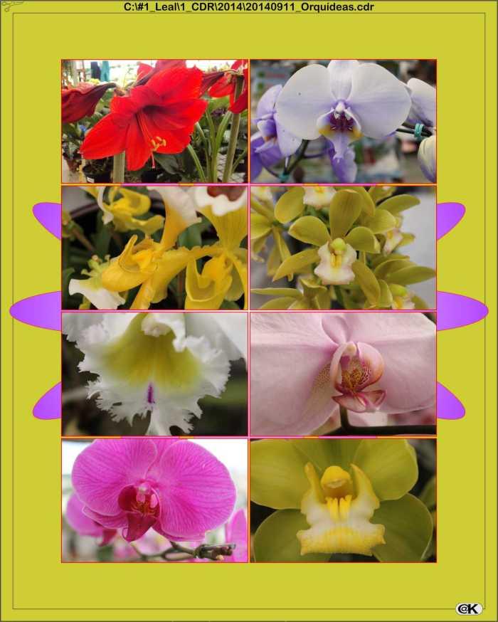 20140911_Orquídeas