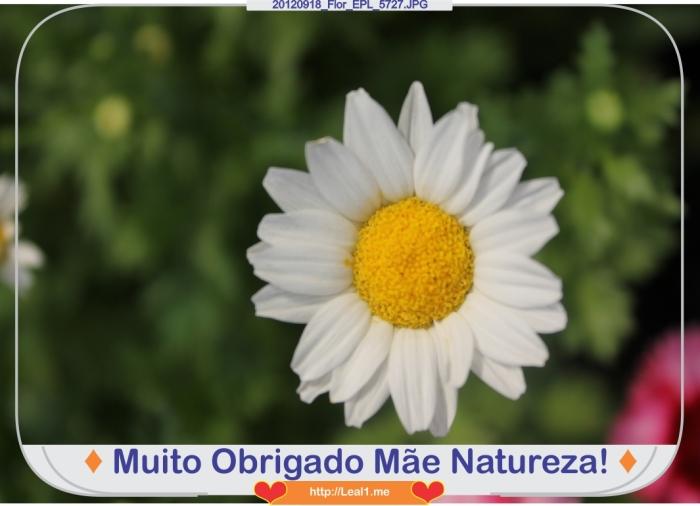 fgko_20120918_Flor_EPL_5727