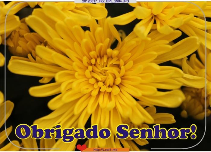 tdZD_20120617_Flor_EPL_2904