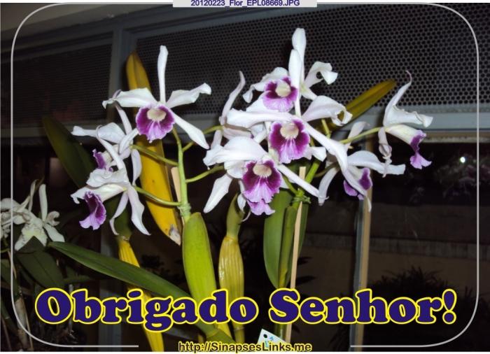 20120223_Flor_EPL08669