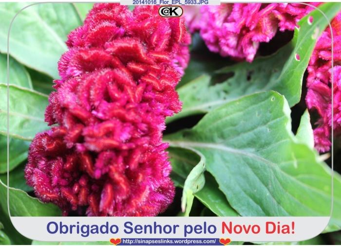 20141016_Flor_EPL_5933