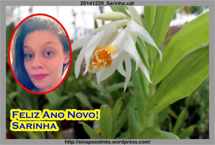 20141229_Sarinha