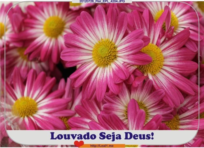 20120726_Flor_EPL_4204
