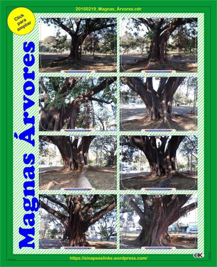 20150219_Magnas_Árvores