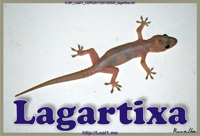 20120303_lagartixa