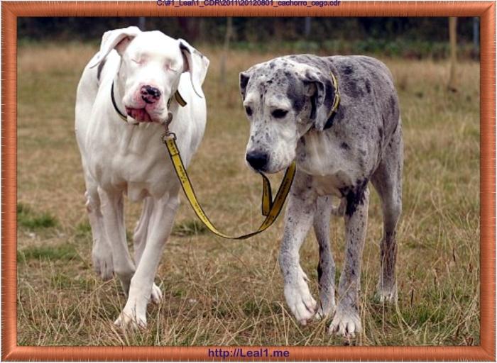 20120801_cachorro_cego1