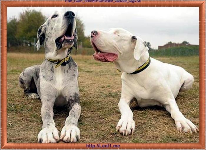20120801_cachorro_cego2