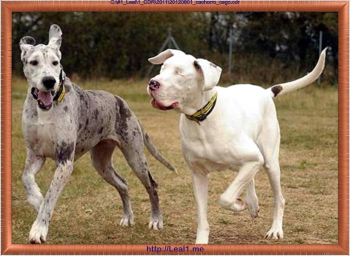 20120801_cachorro_cego3