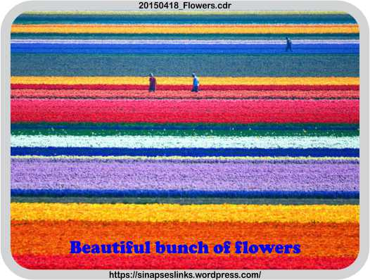 20150418_Flowers
