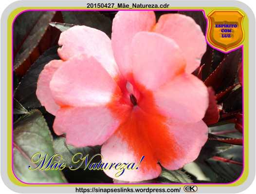20150427_Mãe_Natureza