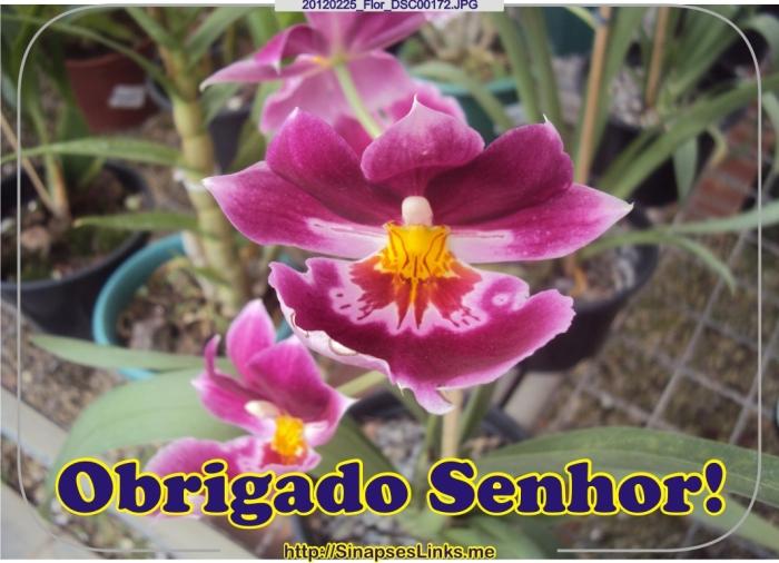 GGpv_20120225_Flor_DSC00172
