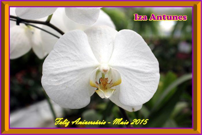 20150526_Iza_Antunes