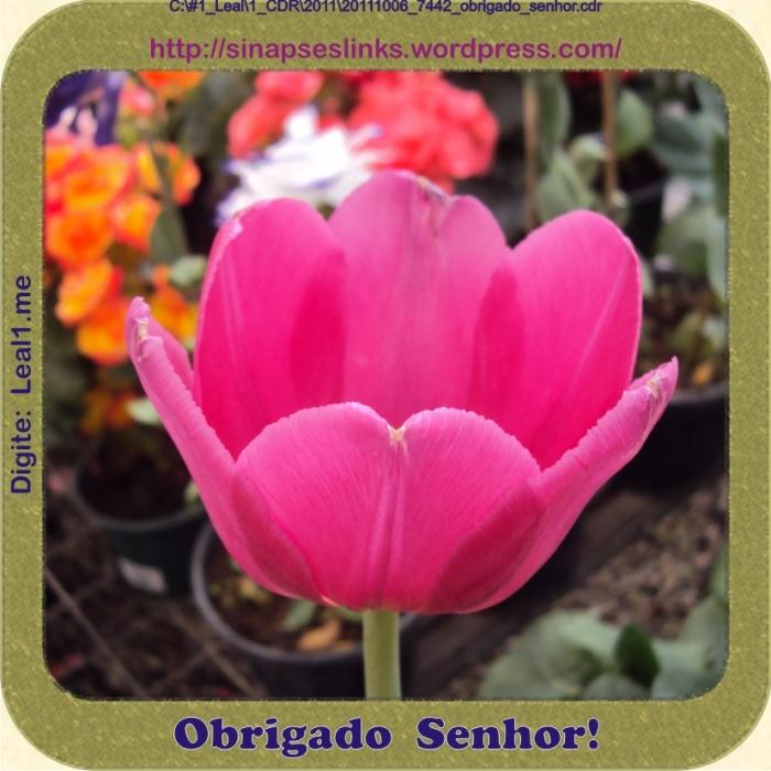 20111006_7442_obrigado_senhor