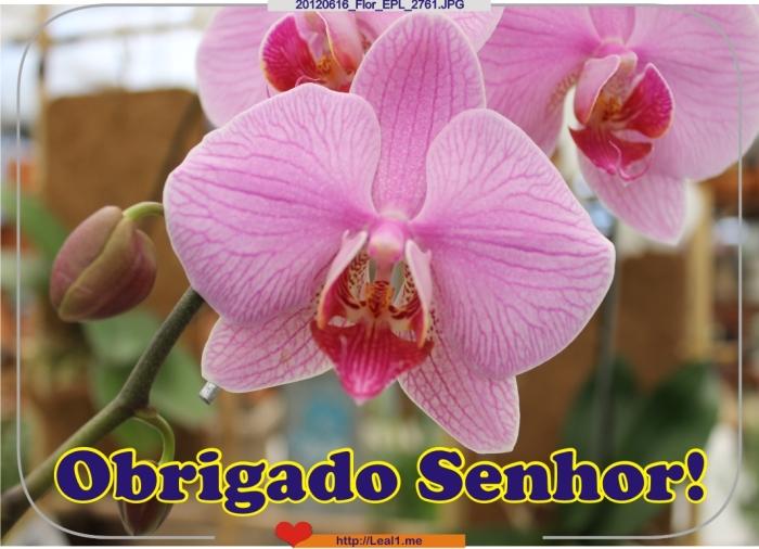20120616_Flor_EPL_2761