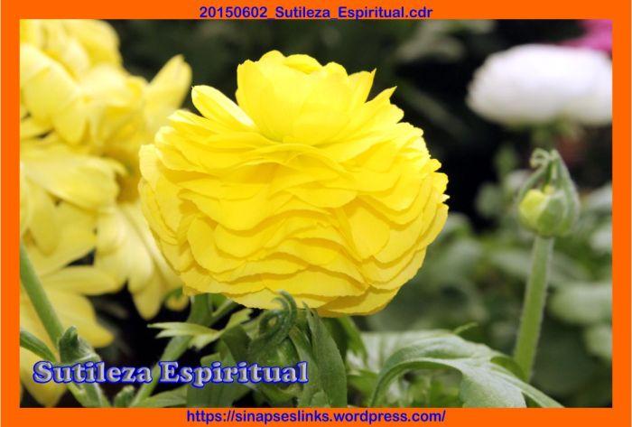 20150602_Sutileza_Espiritual