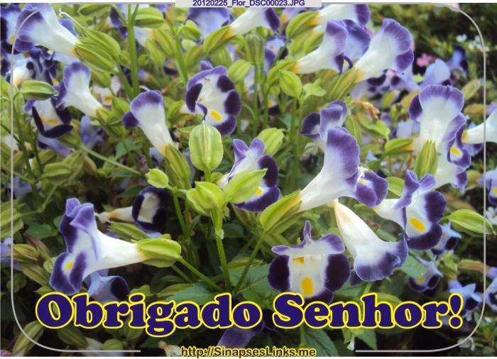 GMnh_20120225_Flor_DSC00023