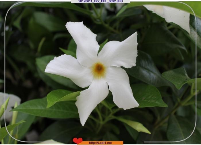 GwAW_20120611_Flor_EPL_0692