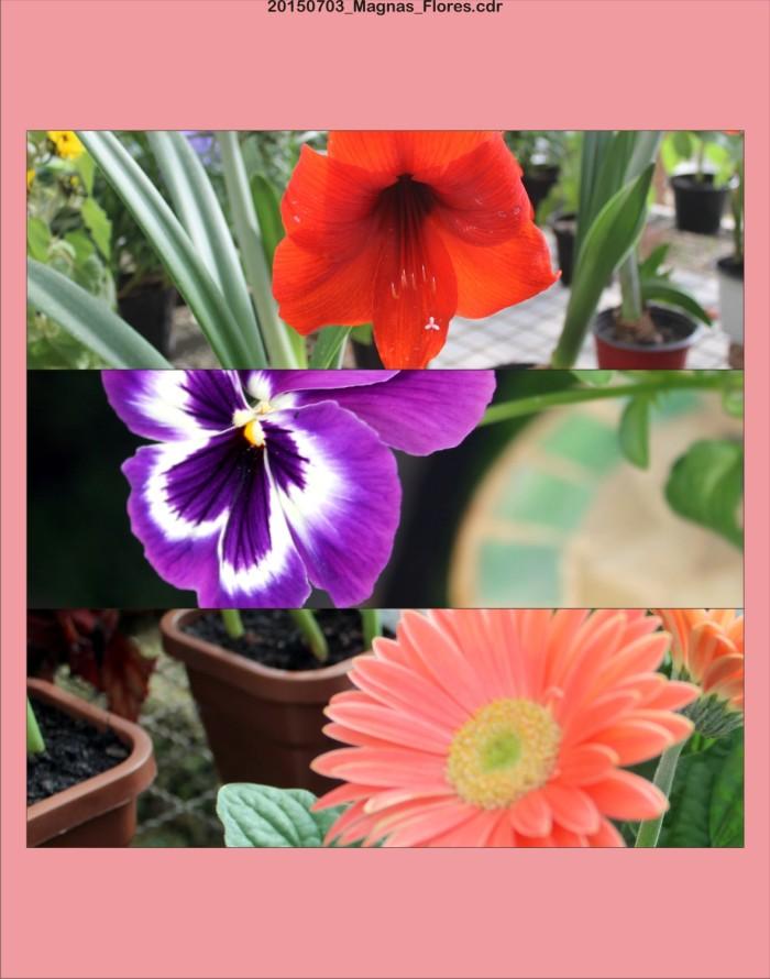 20150703_Magnas_Flores.