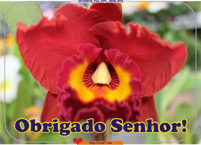 #1_20120616_Flor_EPL_2636
