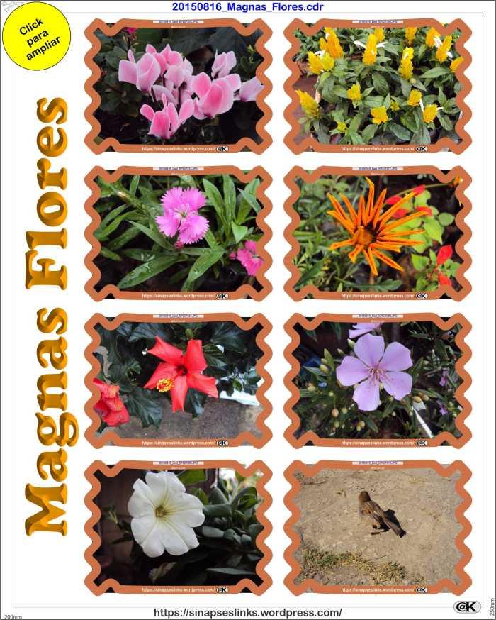 20150816_Magnas_Flores