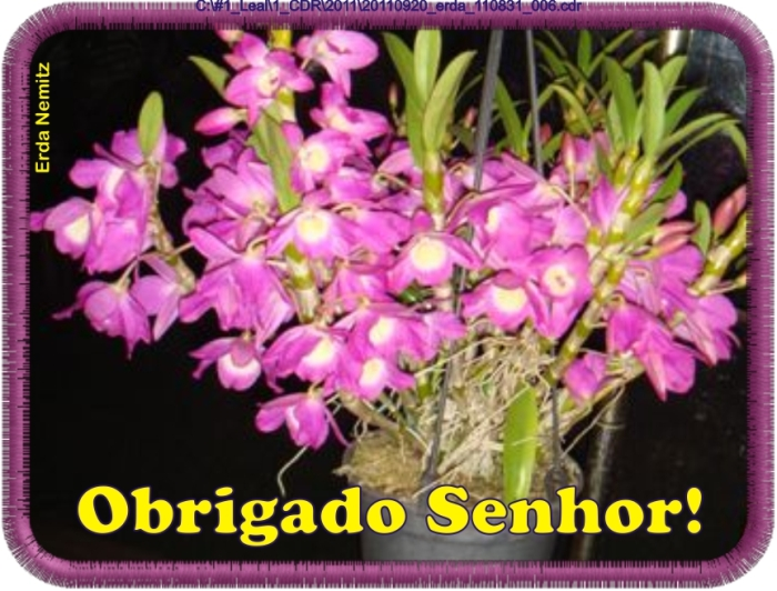 20110920_erda_110831_006