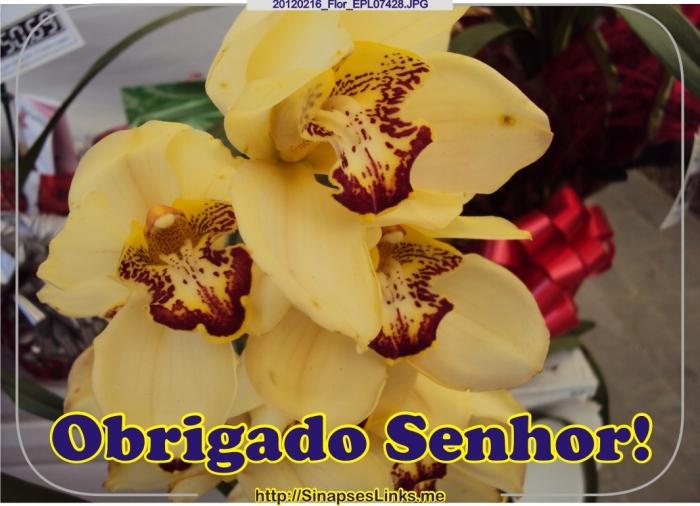 20120216_Flor_EPL07428