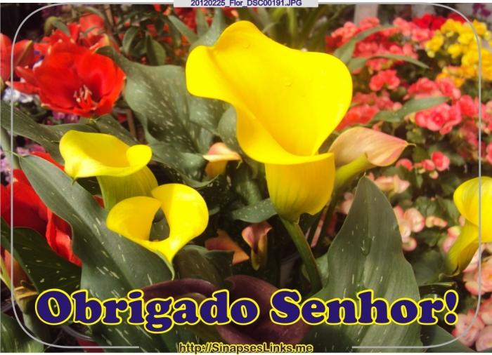 20120225_Flor_DSC00191