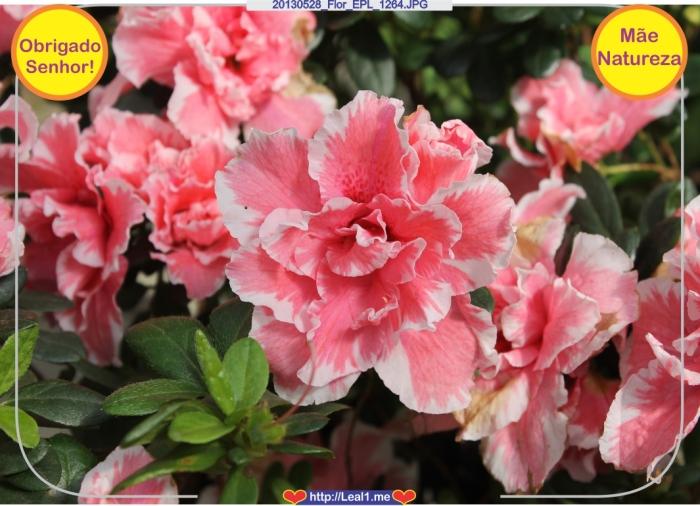 20130528_Flor_EPL_1264