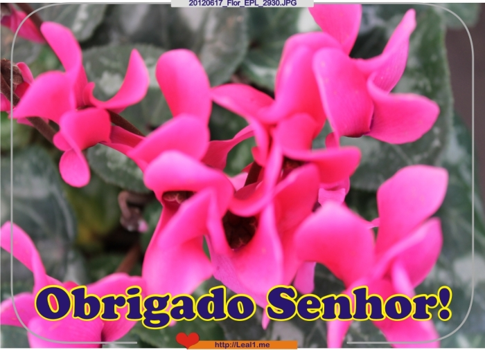 ToSO_20120617_Flor_EPL_2930